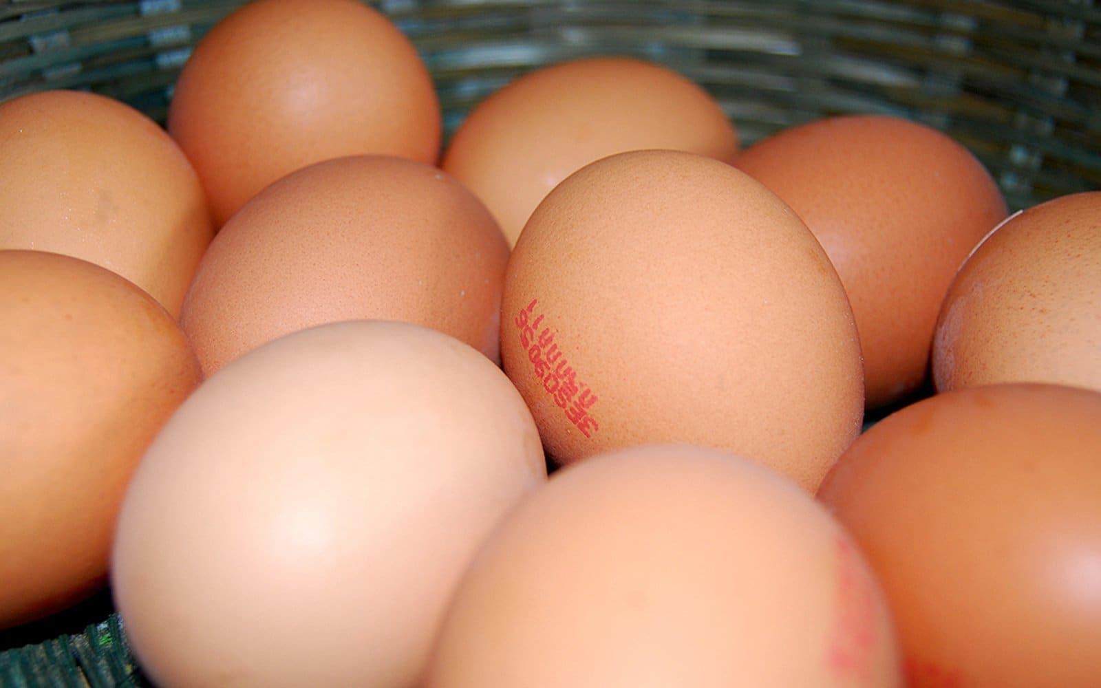 huevos-web