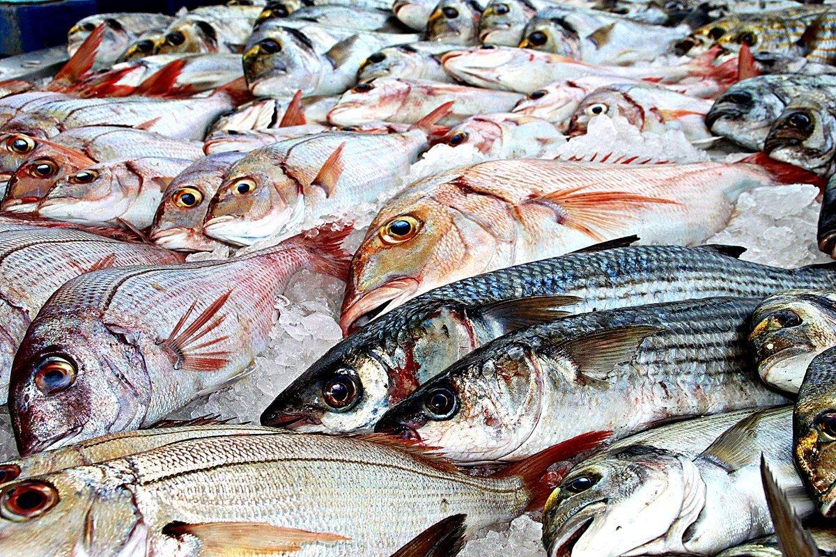 pescado-responsable